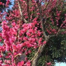 春が近づいてきました…