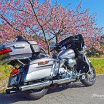 早咲きの桜が綺麗な田…