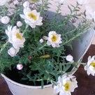 花のある癒しのアロマサロン♪の記事より