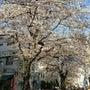 春はもうすぐそこ!【…
