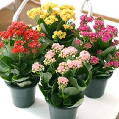 植物の特徴 ~群馬県太田市 大原治療センター~の記事に添付されている画像