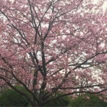 春を感じて♪