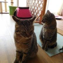 野良の子猫捕獲成功!
