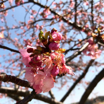 Spring is …