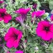 春の花、夏の花