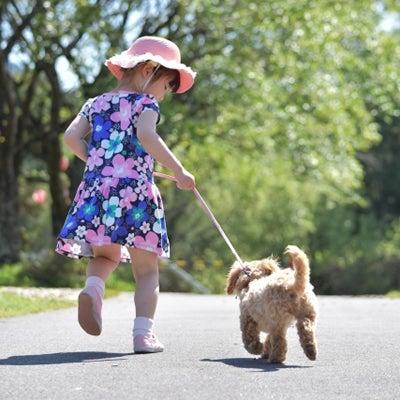 【まとめ】犬と一緒に行けるカフェ 15店+1店の記事に添付されている画像