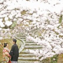 桜色に染まるお写真は…