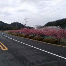 伊豆中央高校のカワヅ…