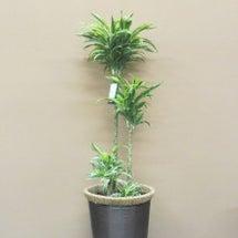 観葉植物 いろんなド…