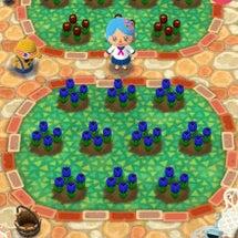 青いチューリップ♪