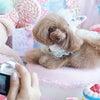 【レポート】SweetyHome FOTOZE 夢の国編の画像