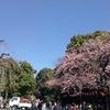 上野公園でお花見の画像