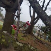金曜日のつぼみ、春モ…