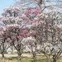 お花の季節♪