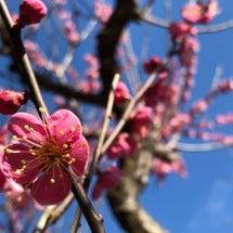 spring♪