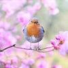 花咲く4月。予定。の画像