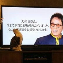 【徒然】猫写真