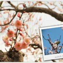 梅の花とスライドホイ…