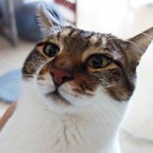 【徒然】今日も猫写真…