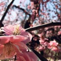 春を想う 温もりと穏…