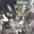 札幌市猫虐待事件 皆…