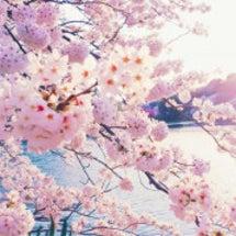 *桜*の季節