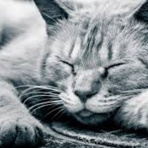 眠るときに、心と身体…