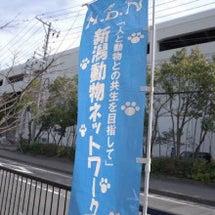 3月11日 新潟市東…