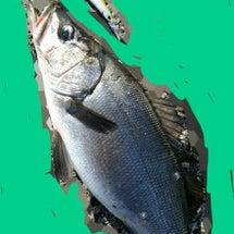 リベンジ釣行(201…