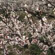 梅は~咲い~たかぁ …