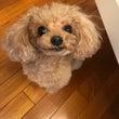 オススメの犬用トイレ