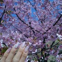 ♪お花見と春のネイル…