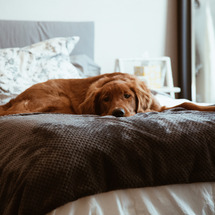 愛犬にストレスは、か…