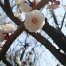 春めいている