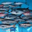 ライト深海高級根魚の…