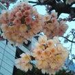 春色のそよ風に~♪