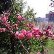 春到来~♫