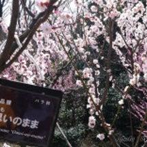 東山植物園は梅と河津…