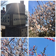 福岡城址の春
