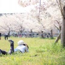 コノユビトマレ! 春…
