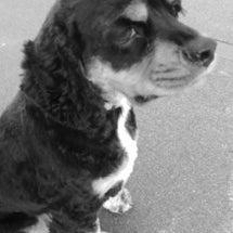 ✈ 犬の自然治癒力を…