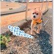 ★★長池公園の忠犬(…