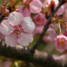 春になって良かった!…