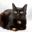 675 黒猫 ひょう…