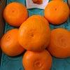 せとかオレンジの画像