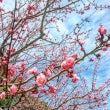 春はもうすぐそこに