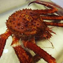 イバラ蟹。