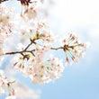 【お茶会開催♪】4月…