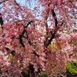虹色生活~春の言葉を…