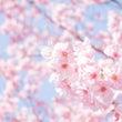 【春の早割り特典あり…